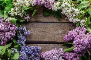 Majówkowe kwiaty